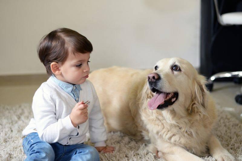 Джон фишер. о чем думает ваша собака. психология собак