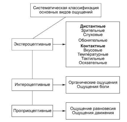 Виды восприятия в психологии: основные свойства с примерами, определение кратко