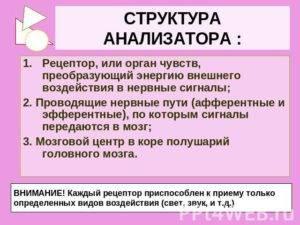 Глоссарий. биология