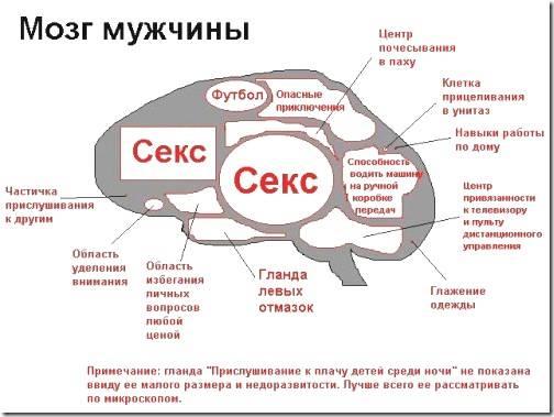 Психология женщины, психология мужчины «женская и мужская логика»