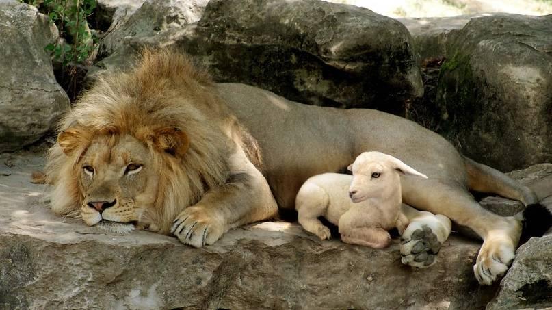 Анималотерапия. человек и домашние животные. основные лечебные свойства домашних животных. влияние животных на человека