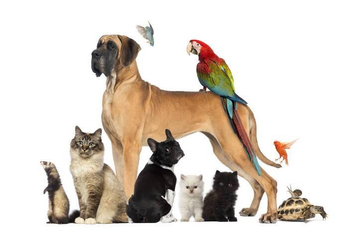 Психология животных