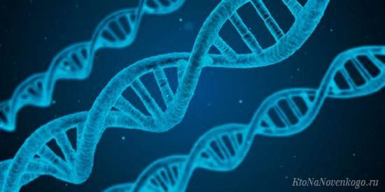 Влияние генотипа и среды на фенотип