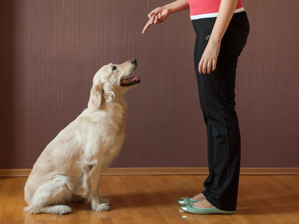 Воспитание и дрессировка собак | сайт о маленьких собачках и не только