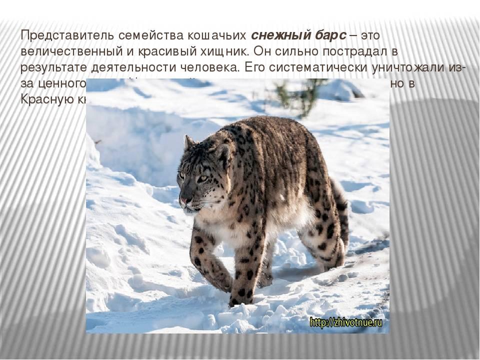 Эмпатия у животных ≪ scisne?