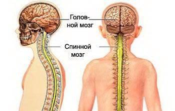 Вегетативная нервная система, ее строение и функции
