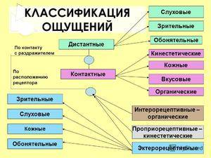 Основные виды восприятия   учеба-легко.рф - крупнейший портал по учебе