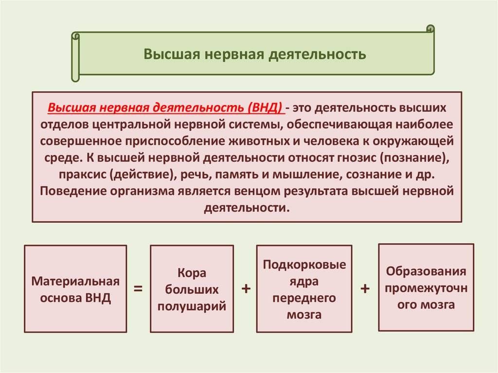 Типы высшей нервной деятельности