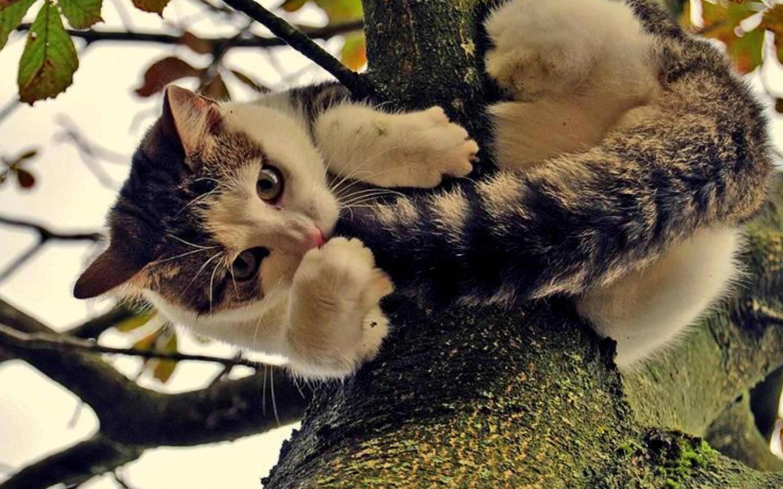 Психология: беременная рыжая кошка - бесплатные статьи по психологии в доме солнца