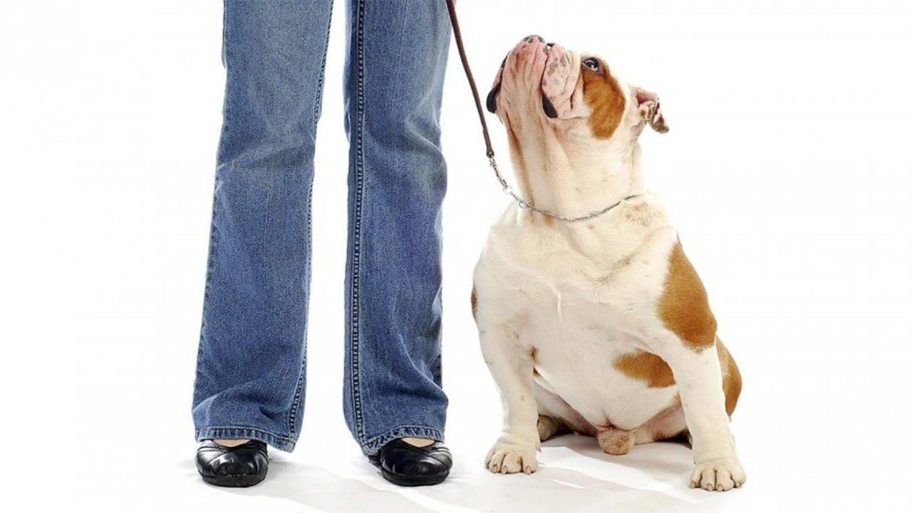 Методы дрессировки собаки. метод наказаний и метод поощрений