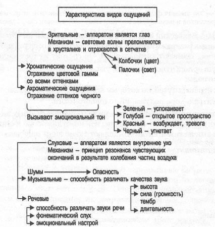 Определение и характеристика ощущений, их классификация и примеры в психологии