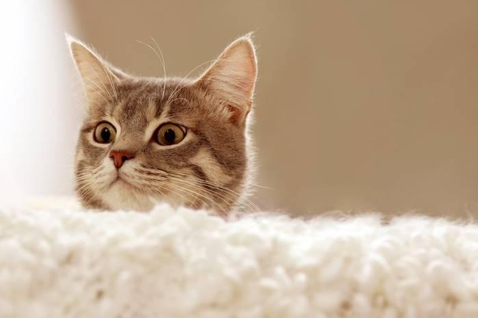Интересные факты о рыжих котах