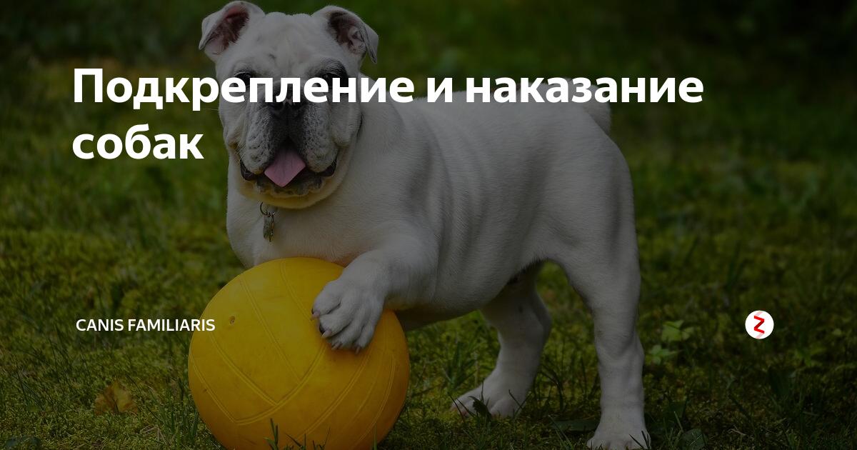 Что такое положительное наказание в дрессировке собак? — зачем человеку собака?