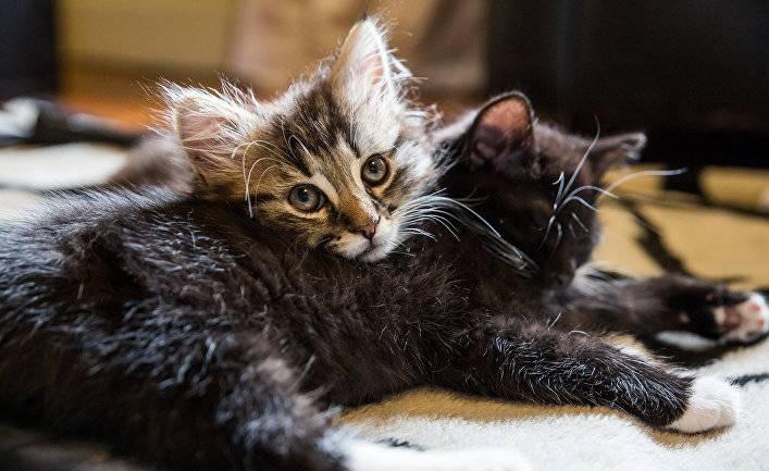 Психология: рыжая рыжая кошка - бесплатные статьи по психологии в доме солнца