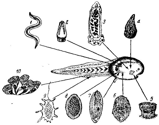 Человек-паразит
