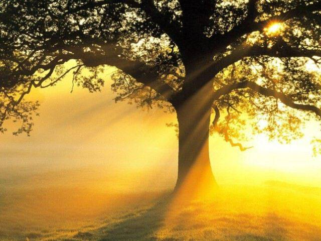 Психология: имя - бесплатные статьи по психологии в доме солнца
