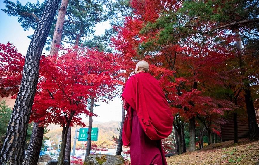 Буддийская психология