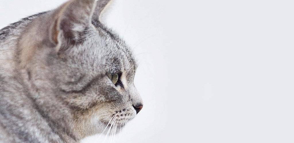 Рыжие кошки в доме — проводники энергии вселенной