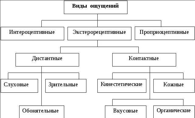 Понятие ощущения в психологии: что это такое, определение, характеристика видов