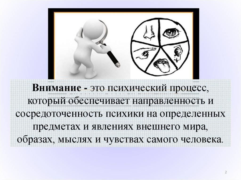 Внимание человека — особенности развития