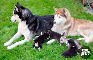 Гриценко владимир. воспитание и дрессировка - послушание собаки (стр. 1) - modernlib.net