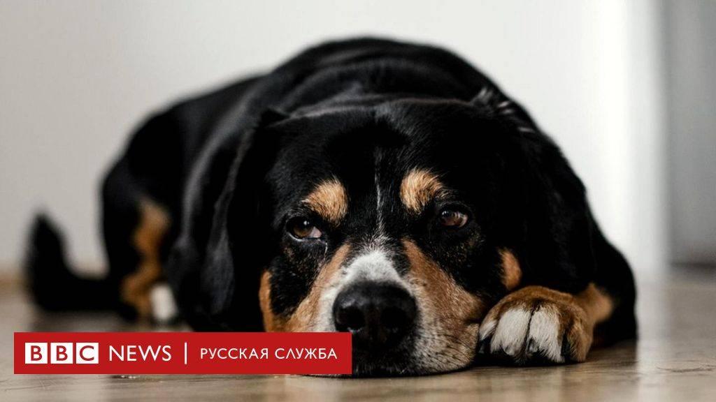 Психология: значение животных - бесплатные статьи по психологии в доме солнца