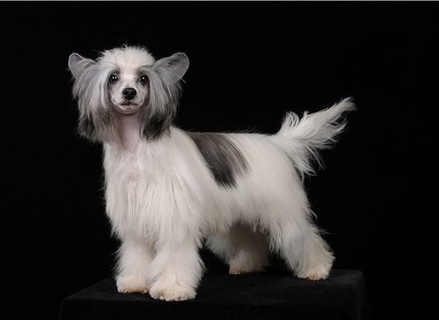 Дрессировка собак – зачем обучать животное порядку и командам, основные методы и правила дрессировки
