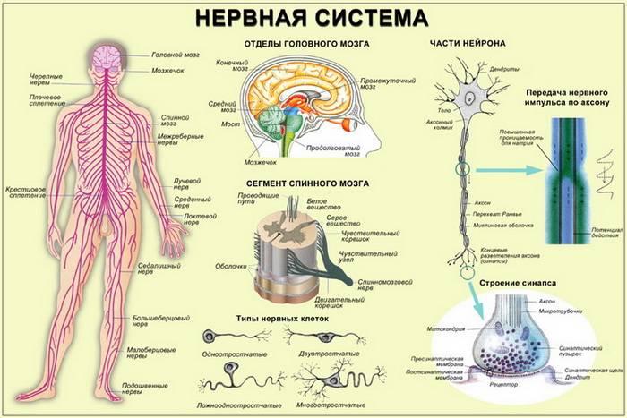 Расстройство вегетативной нервной системы: что это такое?