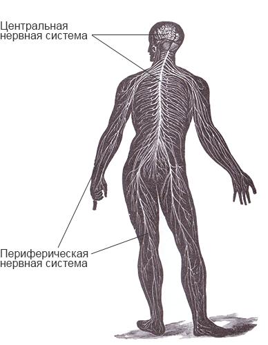 Дисфункция вегетативной нервной системы :: polismed.com