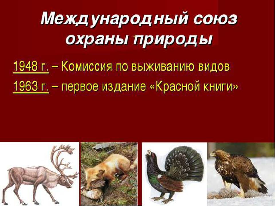 Выражение эмоций у человека и животных - the expression of the emotions in man and animals - qwe.wiki