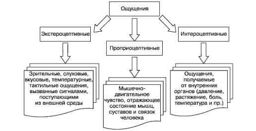 Основные свойства и виды восприятия