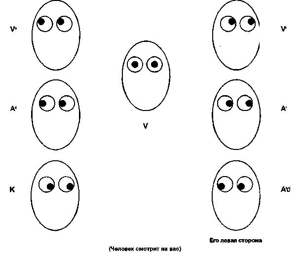 Характеристика визуального, аудиального и кинестетического типа восприятияя (стр. 1 из 5)