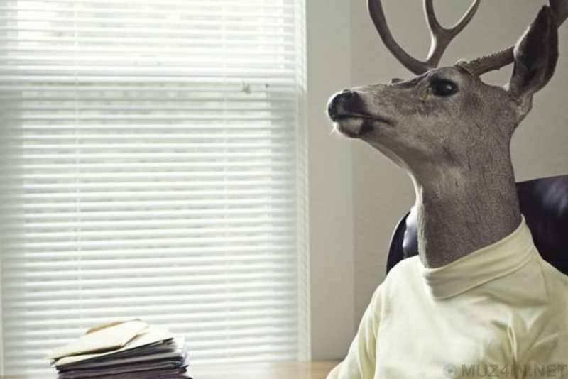 Психология животных | энциклопедия кругосвет