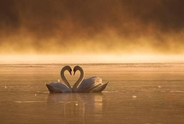 Особенности психологии любви