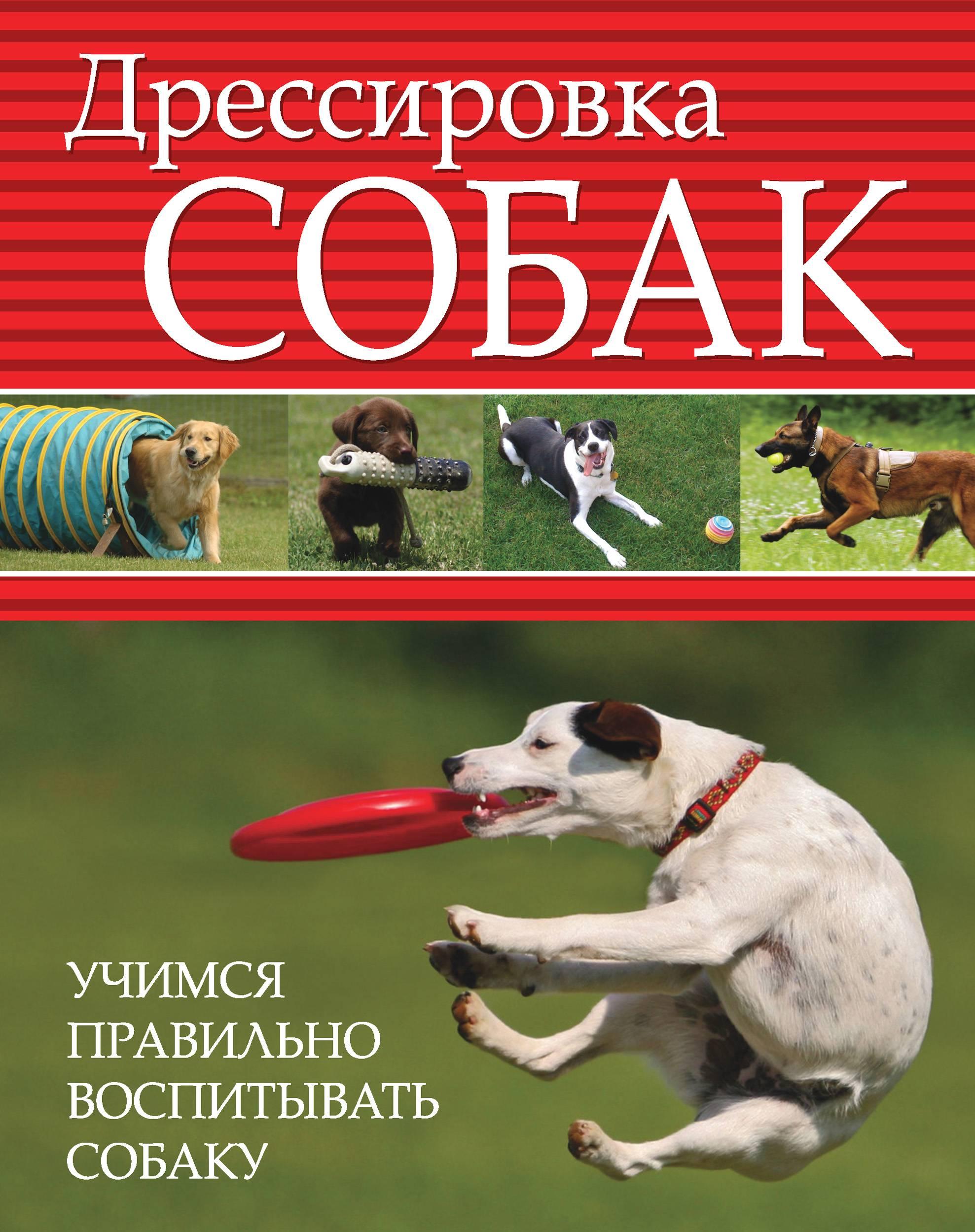 Как правильно дрессировать питомца: секреты успешной дрессировки собак