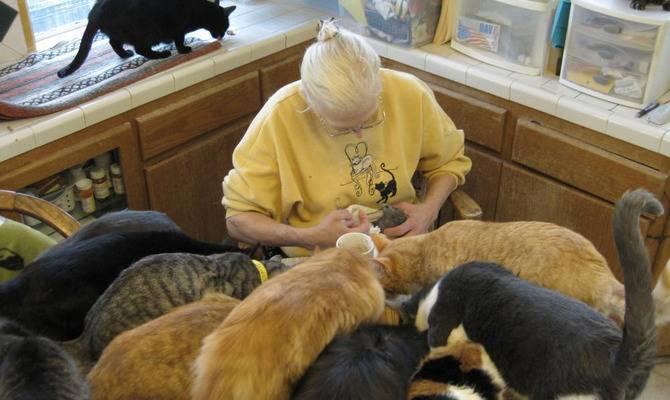 Когда любовь к животным становится патологией… - кошки, животные, любовь к животным, патологическая любовь, странности, психология