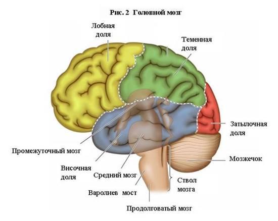 Рак головного мозга сколько живут?