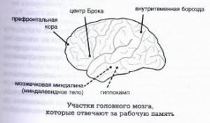 Развитие памяти — эффективные способы тренировки