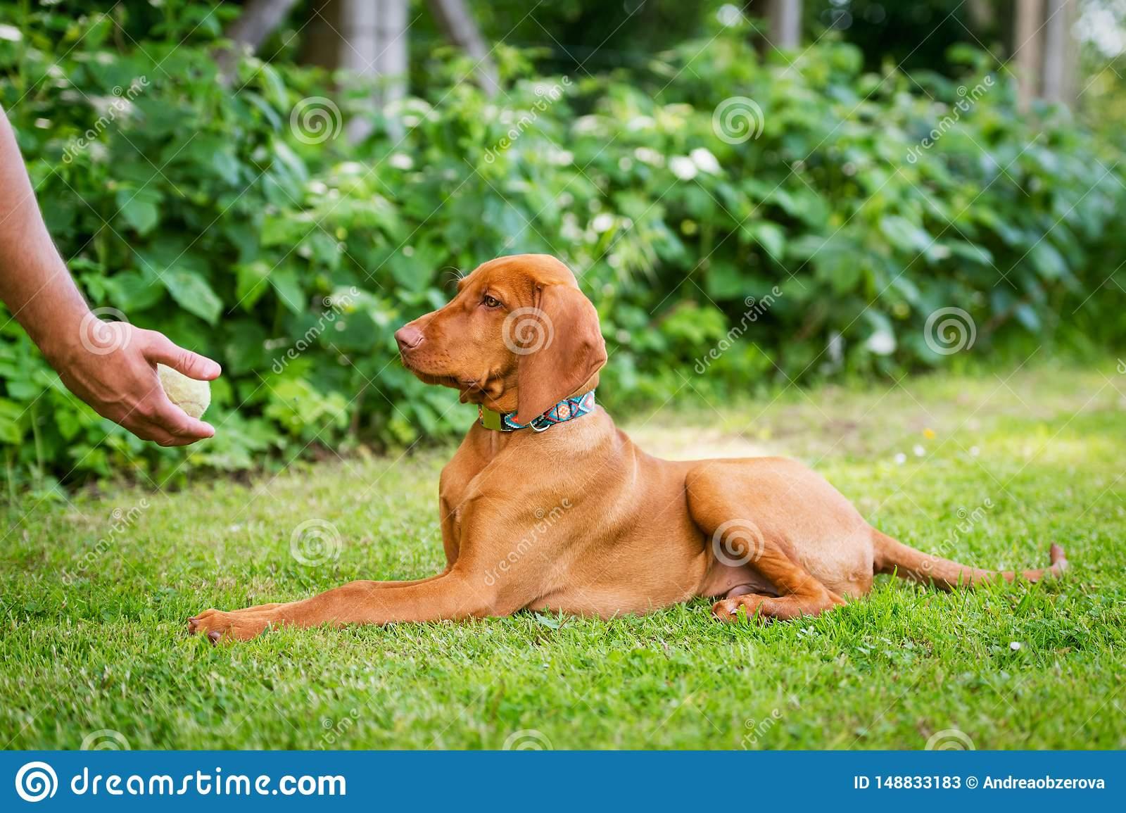 Что такое положительное подкрепление в дрессировке собак? — зачем человеку собака?