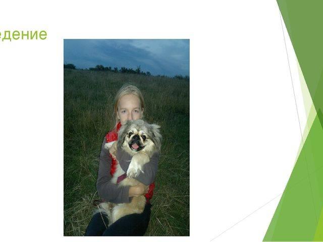 Психологическая помощь животному: им тоже нужен психолог