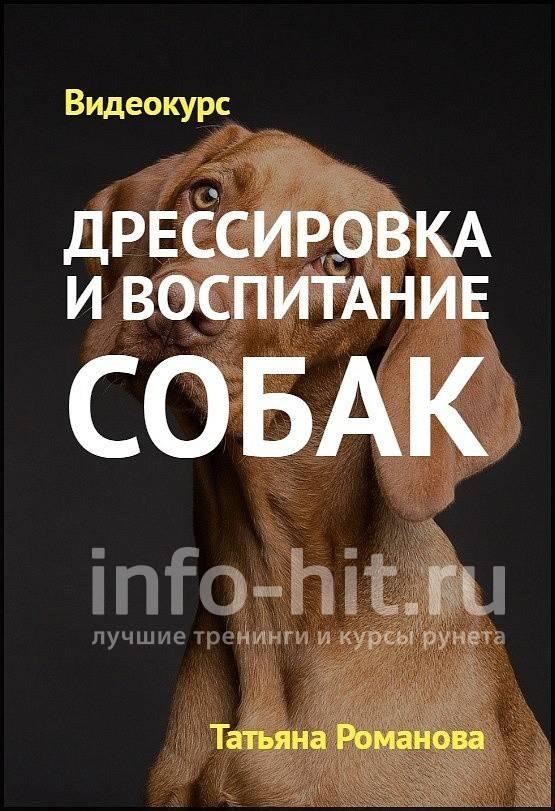 Как правильно дрессировать собаку или щенка: инструкция для начинающих