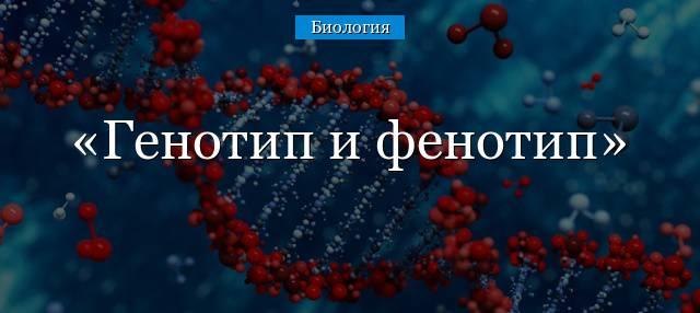 Генотип и фенотип человека - что это за понятия?