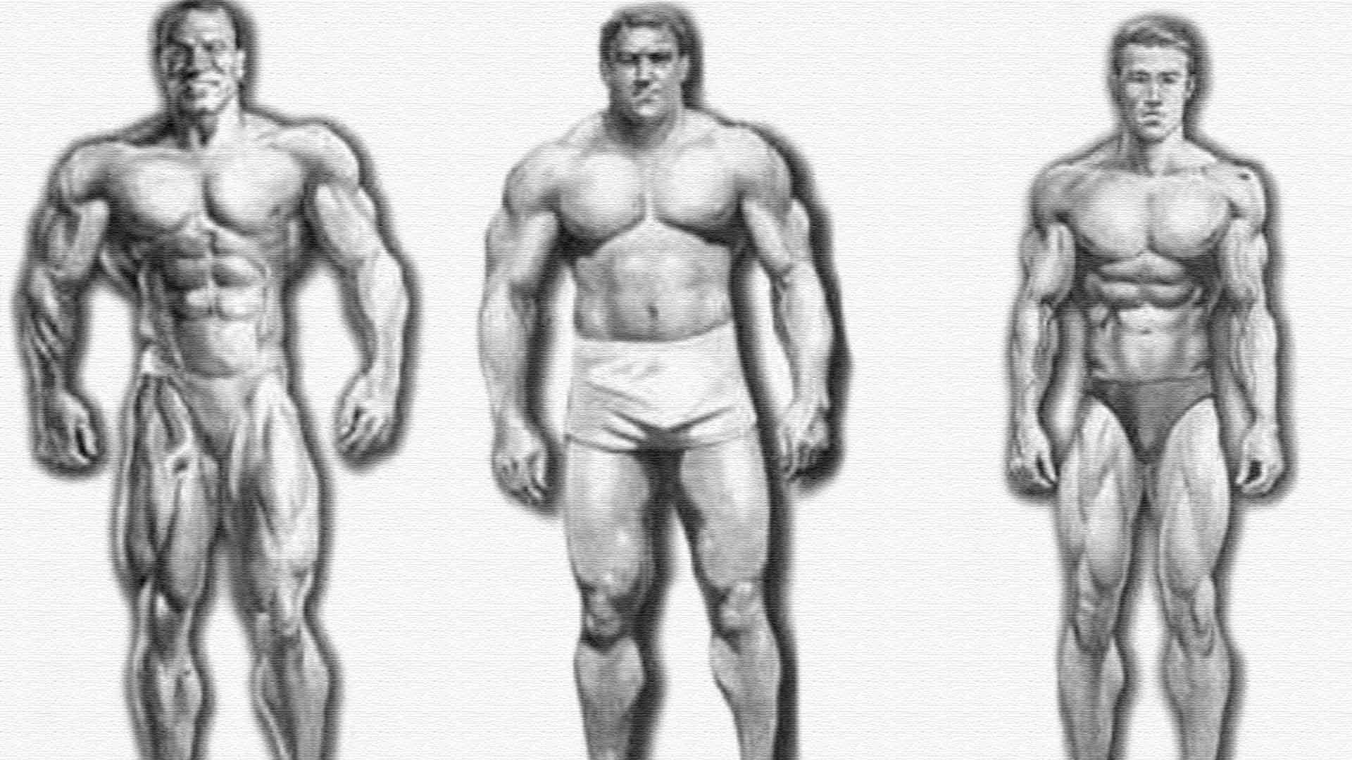 Взаимосвязь типа телосложения (астеник, пикник, атлетик) и психических свойств личности (шизотимик, циклотимик, искотимик) » neo-humanity.ru психология-онлайн